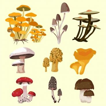 Mushroom Cultivation Business Plan In Bangalore